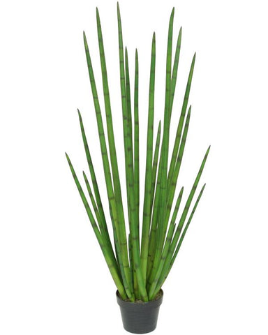 Potted Snake Grass #1353848P00