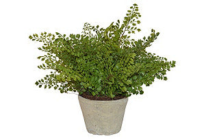 Fern in Cement Pot #51033