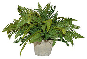 Sword Fern in Cement Pot #51034