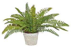 Sword Fern in Cement Pot #51035