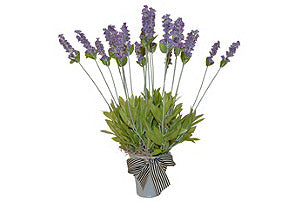 Lavender in Greywashed Pot #51072