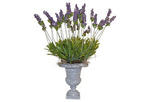 Lavender in Grey Urn #51105