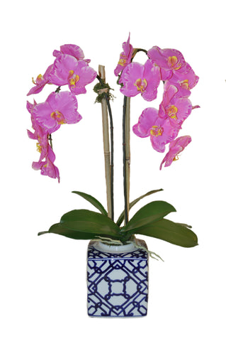 Phalaenopsis Orchids in Square Pot #51108