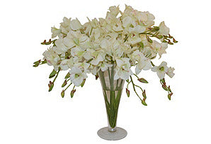 Dendrobiums in Tall Vase #51109