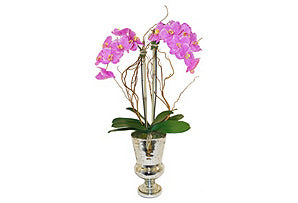 Phalaenopsis with Curly Willow #51141