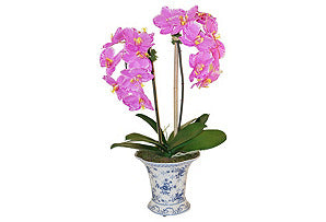 Phalaenopsis in Blue and White Vase #51143