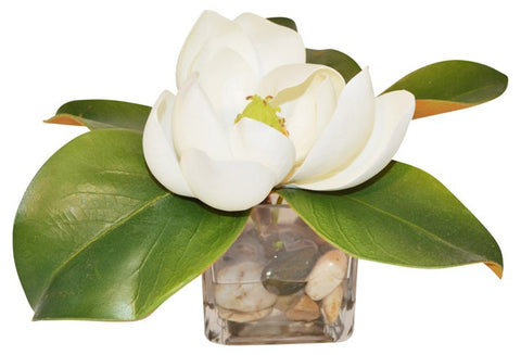 White Magnolia in Cube Vase #51172