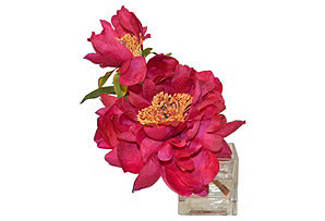 Vintage Peony in Cube #51181