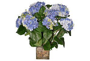 Hydrangea Bush in Rocks #51240