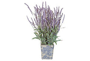 Lavender in Blue and White Square Pot #51242