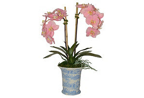 Phalaenopsis Plant in Blue and White Vase #51266