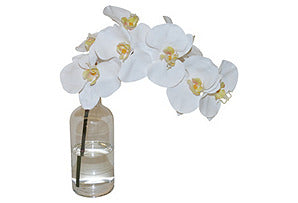 Phalaenopsis in Bottle #51314