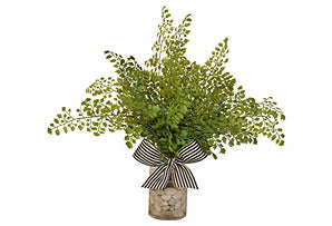 Maidenhair Fern with Bow #51344