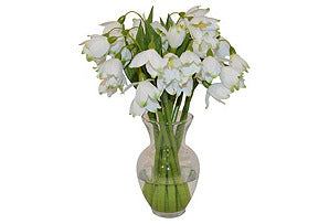 Snowdrops in Small Garden Urn #51391