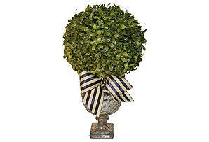 Boxwood in Mercury Urn #51424