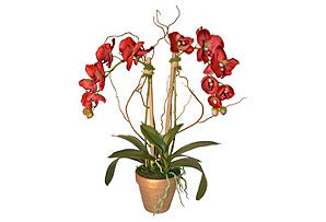Red Phalaenopsis in Gold Pot #51426