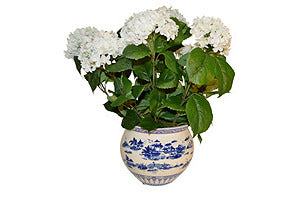Hydrangea in Round Blue and White Bowl #51508