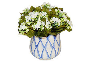 White Kalanchoe in Blue and White Pot #51567
