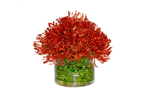 Protea in Cylinder Vase with Green Vines #51734