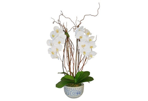 White Orchids in Round Blue and White Bowl #51811