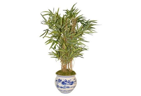 Bamboo Palm in Blue and White Container #51813