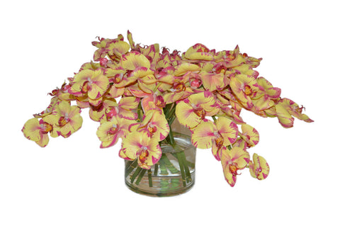 Yellow Magenta Orchids in a Cylinder Vase #51840