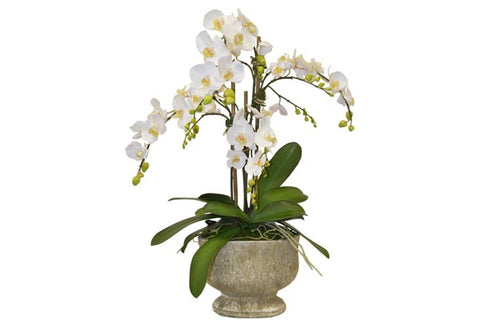 White Phalaenopsis Orchids in a Ceramic Urn #52120