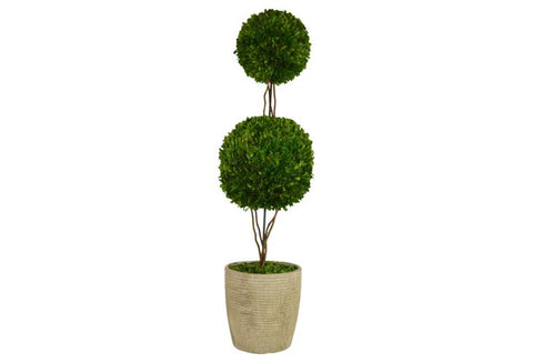 Preserved Double Boxwood Topiary #52223