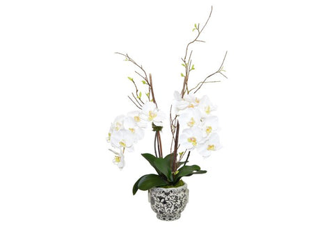 White Phal Orchids in a Porcelain Vase #52237