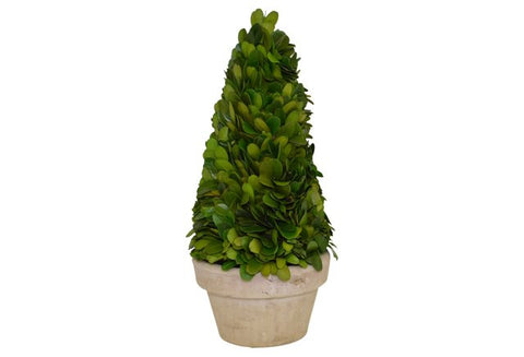 Preserved Boxwood Cone Tree in a Pot #52341