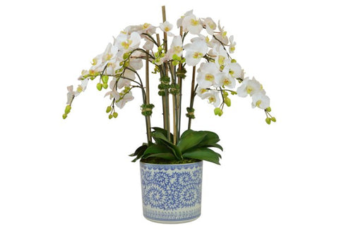 White Orchids in a Blue and White Vase #52471