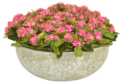 Pink Kalanchoe in a Ceramic Round Bowl #52502