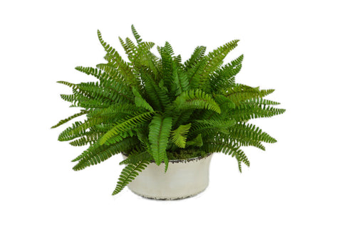 Green Fern in a White Ceramic Cylinder Container #52514