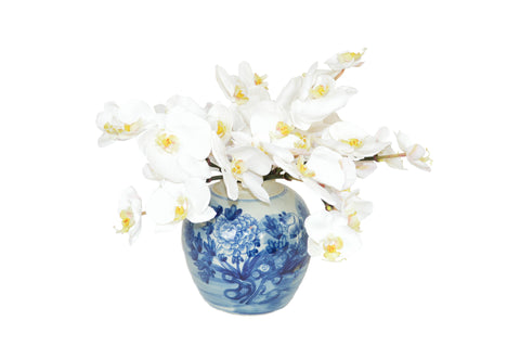 White Phal Orchids in a Blue and White Jar #52522