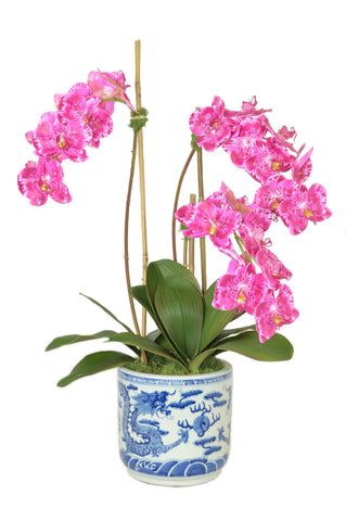 Fuschia Phal Orchids in Large Blue and White Cylinder Container #52573