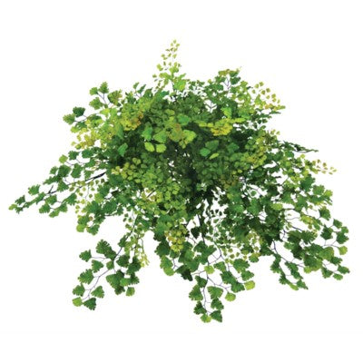 Maidenhair Fern Bush #15274500
