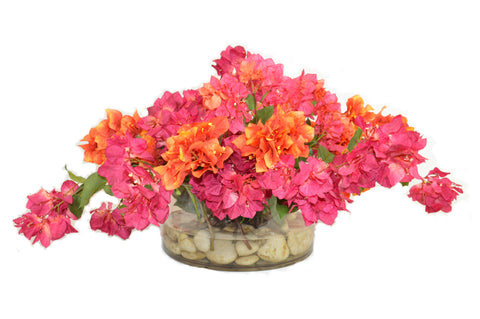 Magenta/Orange Bougainvilleas in Short Cylinder Vase #52808