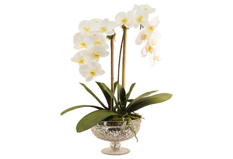 White Phalaenopsis Orchids in Footed Bowl #8066
