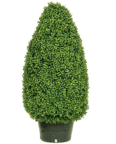 Potted Boxwood Cone #1850542P00