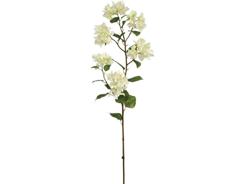 White Bougainvillea Stem #19121000