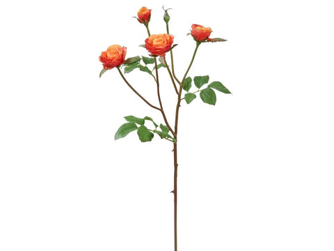 Peach Floribunda Rose Stem #195118CPCRD00