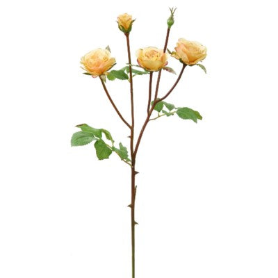 Yellow Floribunda Rose Stem #195118CYL00