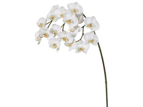White Phalaenopsis Orchid Spray #19515900