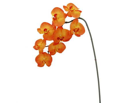8 Blossom Orange Phalaenopsis Orchid #195271OR00