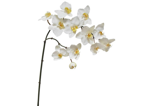 Phalaenopsis Orchid Spray #195272WW00