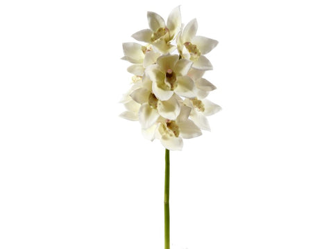 Small White Cymbidium Orchid Stem #19530800
