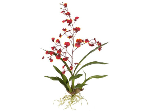 Small Red Dancing Oncidium Orchid Plant #195316BU00