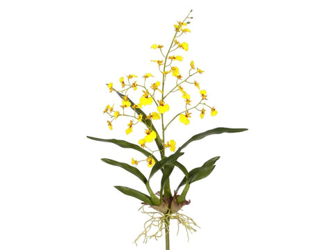 Small Yellow Dancing Oncidium Orchid Plant #195316YL00