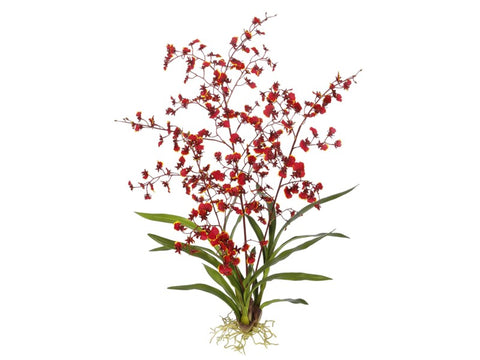 Large Red Dancing Oncidium Orchid Plant #195318BU00