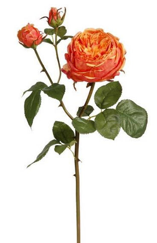 Orange English Bianca Rose Stem #195458CPCRD00